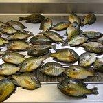 Bluegill & sunfish!