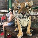 Tiger Kingdom, big cat