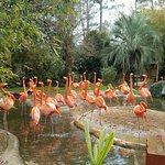 Riverbanks Zoo and Botanical Garden의 사진
