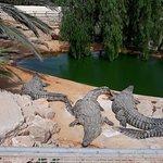 Foto di Djerba Explore