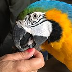 Their resident parrot. Funny and friendly, but loves Mum & Dad!