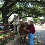 Patron (or another longhorn) is available for photo ops