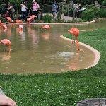 Nashville Zoo의 사진