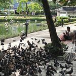 ภาพถ่ายของ สวนเบญจสิริ