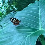 Фотография Key West Butterfly and Nature Conservatory