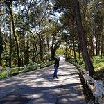Zdjęcie Parque de Cabo Mayor