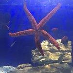 Bild från Aquaworld Aquarium & Reptile Rescue Centre