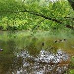 Park Pokrovskoye-Streshnevo Foto