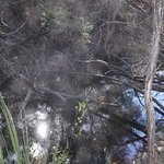 The Platypus Waterholes Walk