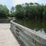 The boardwalk that extends into the pond so you can view the wildlife.