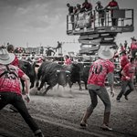 The Strathmore Stampede's signature event, Running with the Bulls!