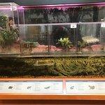Indigenous fish & amphibians of Florida