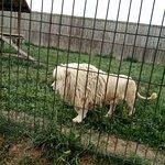 Zoo Wojciechow