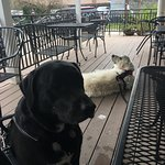 Our dogs enjoying the back porch