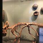 Foto di Museo di Storia Naturale (Naturhistorisches Museum)