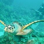 Billede af N2theBlue Scuba Diving