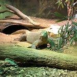 Foto Zoo Atlanta