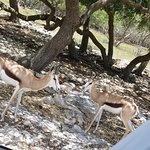 Natural Bridge Wildlife Ranch의 사진