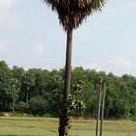 صورة فوتوغرافية لـ Joypur Jungle