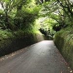 Foto de Sakurajima Nature Dinosaur Park