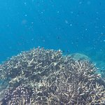 Snorkeling with schools of fish and coral