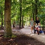 Wandelen over ons bosrijke park