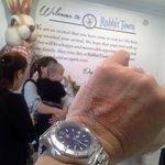 Rabbit Town: kandang rabbit