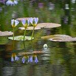 Photo of Harold Porter National Botanical Gardens
