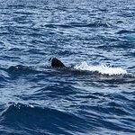 Foto de Cancun Whale Shark Tours