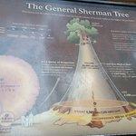 Photo of General Sherman Tree