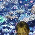 西雅图水族馆照片