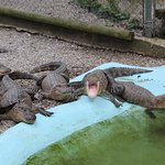 Photo de Arkansas Alligator Farm & Petting Zoo