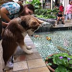 The dog sees the huge gold fish