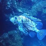 Photo of Aquarium de la Reunion
