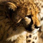Foto Cango Wildlife Ranch