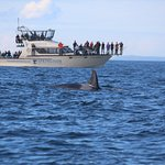 Photo de SpringTide Whale Watching & Charters