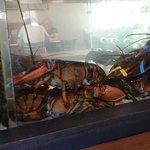 Lobster tank tableside