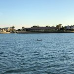 Foto de Encounters With Dolphins