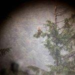 Mull Eagle Watch Foto