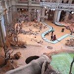 Zoologisches Museum Konigの写真