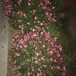 Фотография Бакинский приморский бульвар