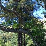 石灰窑州立公园照片