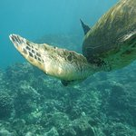 Foto de Maui Snorkel Tours