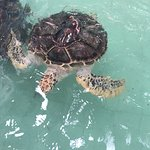 Royal Thai Navy Third Fleet Turtle Nursery照片