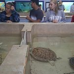 Foto van Tortugranja (Turtle Farm)