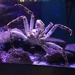 Foto de Birch Aquarium at Scripps