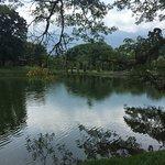 Bilde fra Taiping Lake Gardens