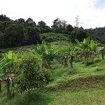 Fruits park photo's