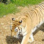 Foto di Colchester Zoo