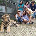 Фотография Tiger Park Pattaya